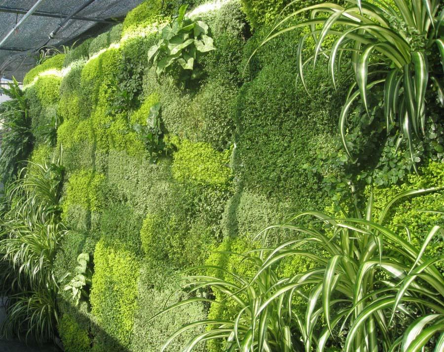 Pareti Giardino Verticali: Pareti per giardini verticali applicazioni d arte.