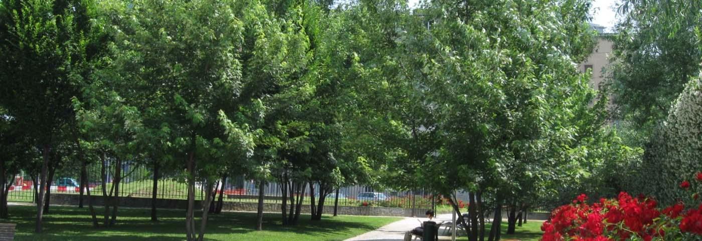 Piante Alto Fusto : Peverelli design construction and maintenance of green