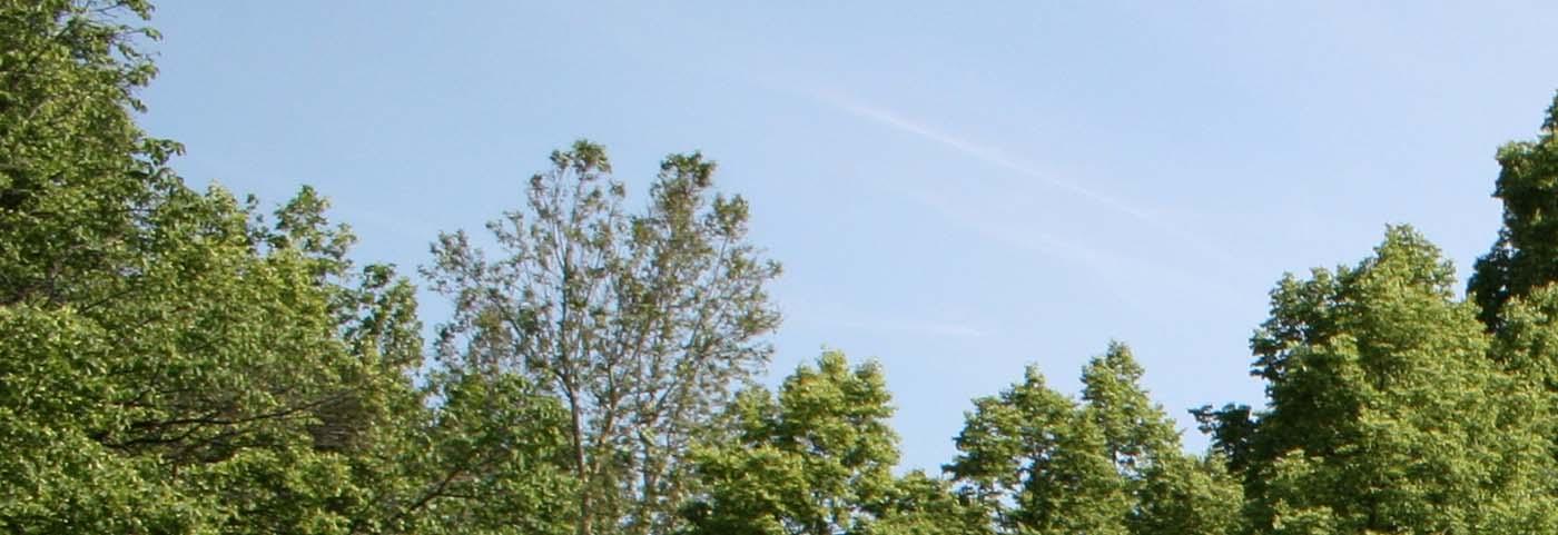 Peverelli design construction and maintenance of green - Piante alto fusto da giardino ...