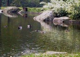 14. giardini acqua